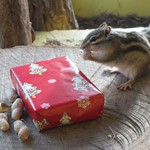 chipmunk with present.JPG